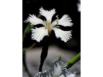 Photo Flower 11 Flower