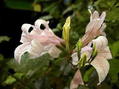 Photo Flower 16 Flower
