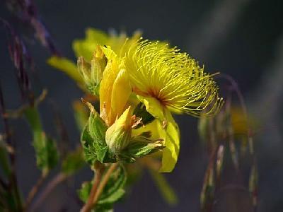 Photo Flower 17 Flower