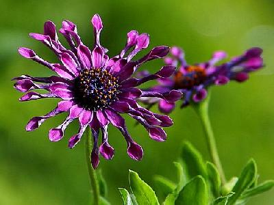 Photo Flower 21 Flower