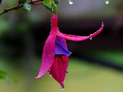 Photo Flower 24 Flower