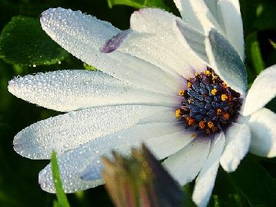 Photo Flower 27 Flower