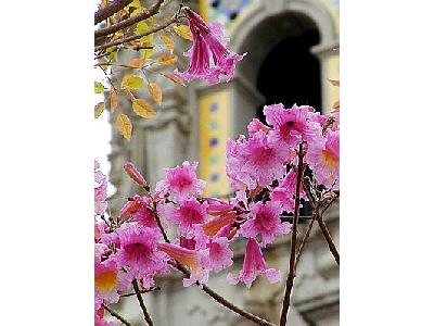 Photo Flower 33 Flower