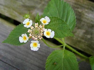Photo Flower 4 Flower