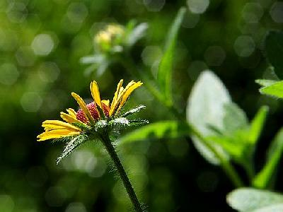 Photo Flower Macro Flower