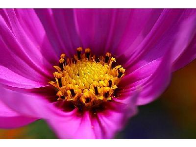 Photo Flower Macro 3 Flower