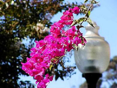 Photo Flowers 15 Flower