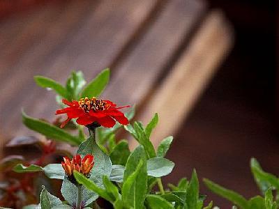 Photo Flowers 7 Flower