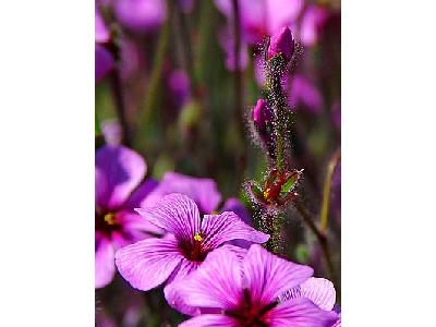 Photo Flowers 8 Flower