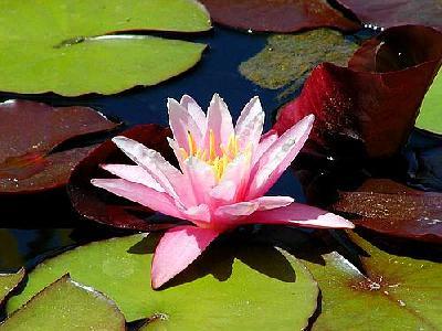 Photo Mission 4 Flower