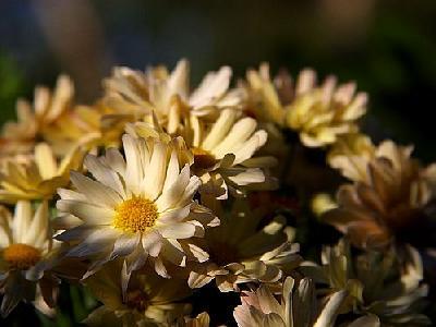 Photo Morning Flowers Flower