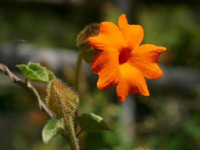 Photo Orange Flower Flower