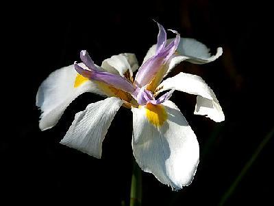 Photo Orchids Flower