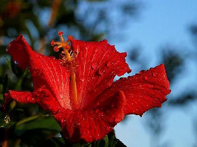 Photo Rain Flower