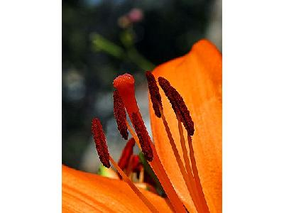 Photo Stamen And Pistil Flower