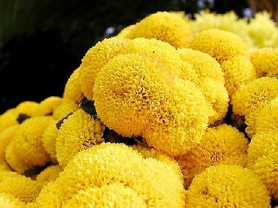 Photo Yellow Flower Flower