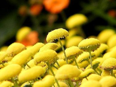 Photo Yellow Flowers Flower