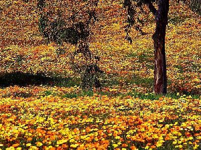 Photo Yellow Flowers 6 Flower