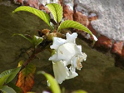 Photo Flower 18 Flower