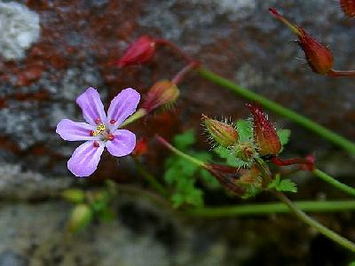 Photo Flower 35 Flower