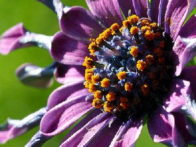 Photo Flower 5 Flower