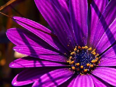 Photo Flower 8 Flower