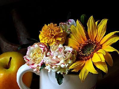Photo Flower Still Life Flower