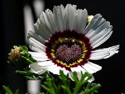 Photo Flowers 6 Flower