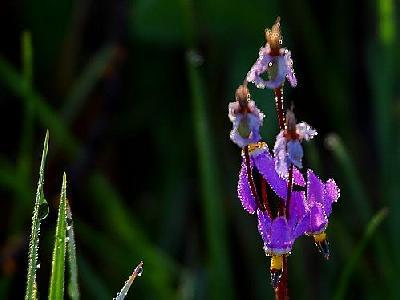 Photo Meadow Wildflowers Flower