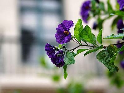 Photo Purple Flowers Flower