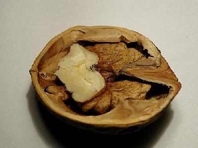 Photo Nut 2 Food