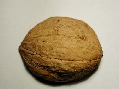Photo Nut 3 Food