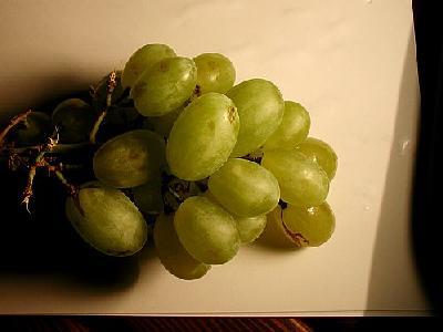Photo Vine 1 Food