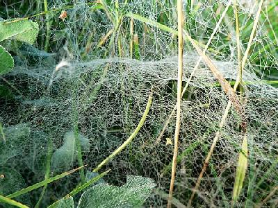 Photo Deep Covered Spider Web Insect