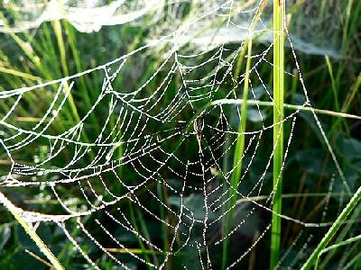 Photo Dew Covered Spider Web Insect
