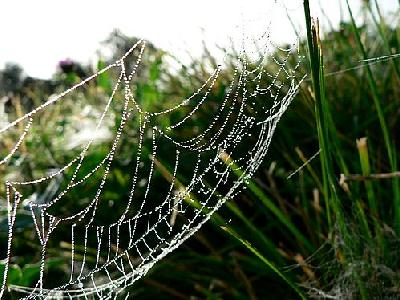 Photo Dew Covered Spider Web 2 Insect