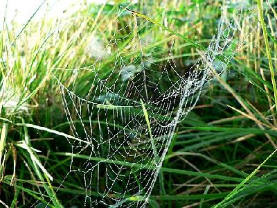 Photo Dew Covered Spider Web 4 Insect