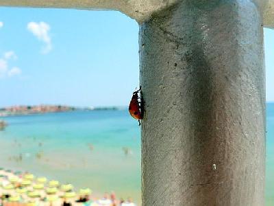 Photo Vertical Ladybug Insect