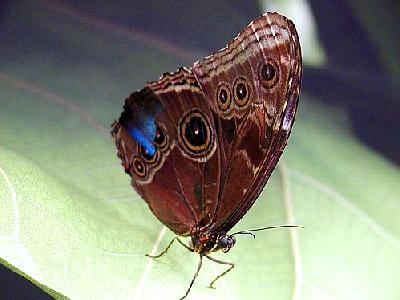 Photo Butterfly Insect