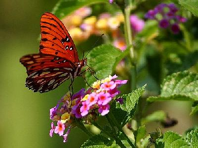 Photo Butterfly 4 Insect