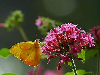 Photo Butterfly Flower Insect