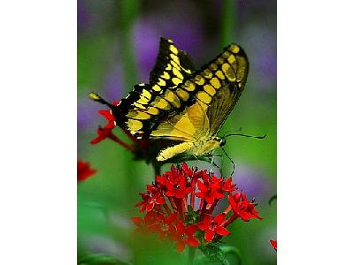 Photo Butterfly Flower 2 Insect