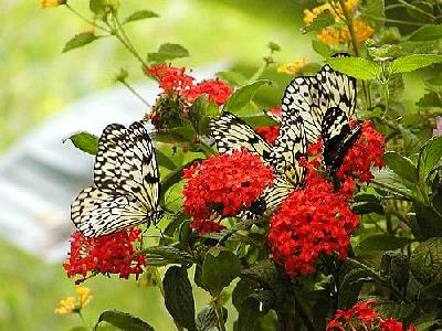 Photo Butterflyes 2 Insect