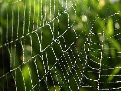 Photo Dew And Spiderweb Insect