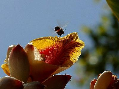 Photo Flower Bee Insect