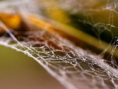 Photo Spiderweb 3 Insect