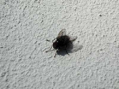 Photo Fly 4 Insect