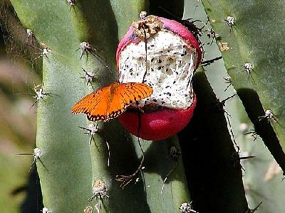 Photo Butterfly And Cacti Insect
