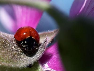 Photo Lady Bug Insect