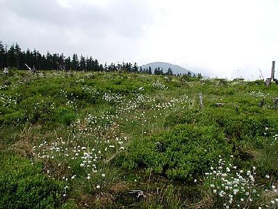 Photo Mountain 6 Landscape